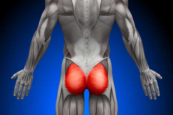Importance of strong gluteus muscles.