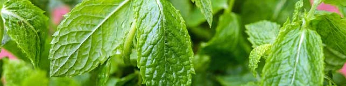 Mint, adds taste as well as helps digestion your food