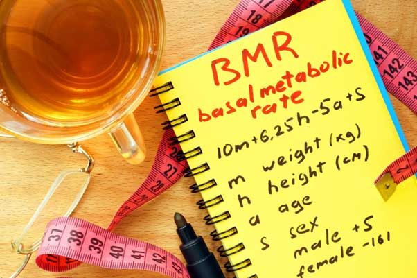 Understanding BMR and the factors affecting BMR